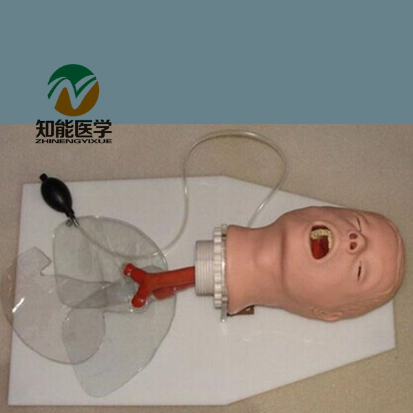BIX-J50 Medical Science Airway Training Model,Trachea Intubation Training Model G053