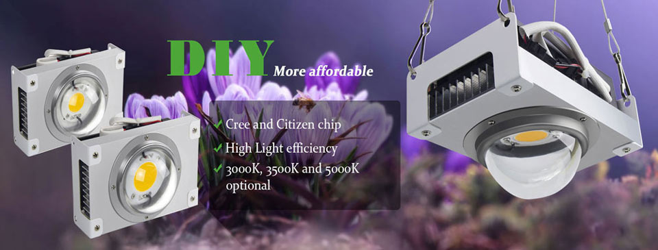 US $46 32 31% OFF|CREE CXB3590 COB LED Grow Light CXB3070 Full Spectrum  100W Citizen 1212 LED Grow Lamp Indoor Tent Greenhouse Hydroponic Plant-in  LED