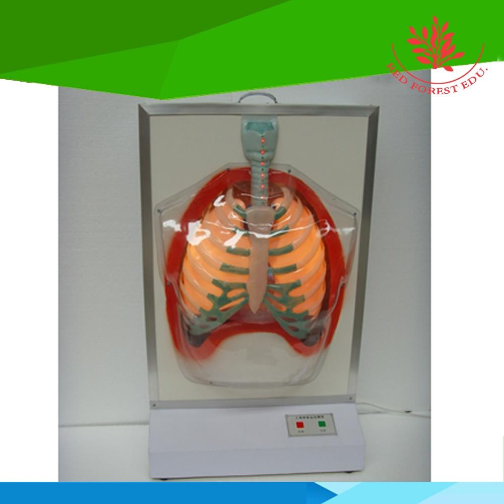 Ausgezeichnete service Anatomie biologische Elektrischen ...