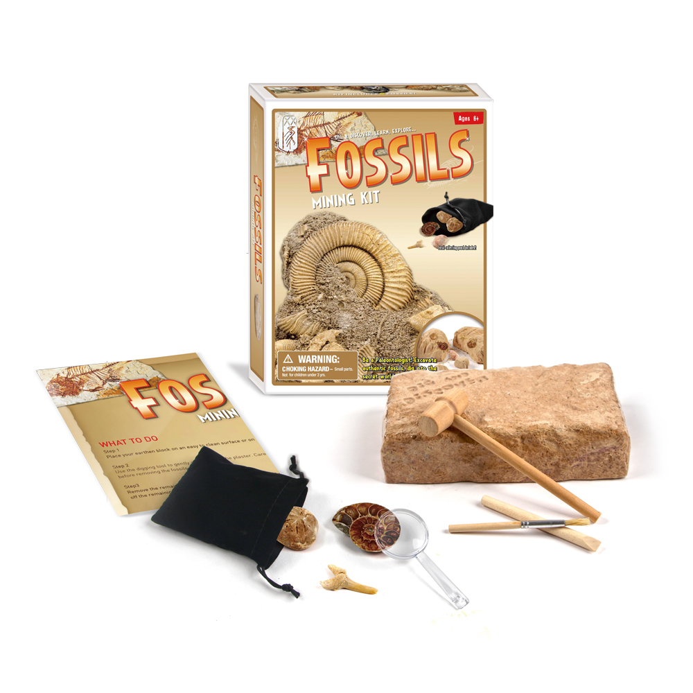 Children History Learning Tool Shellfish Fossil Excavation Toy Kits Classic Traditional Science Educational Learning Toy gifts