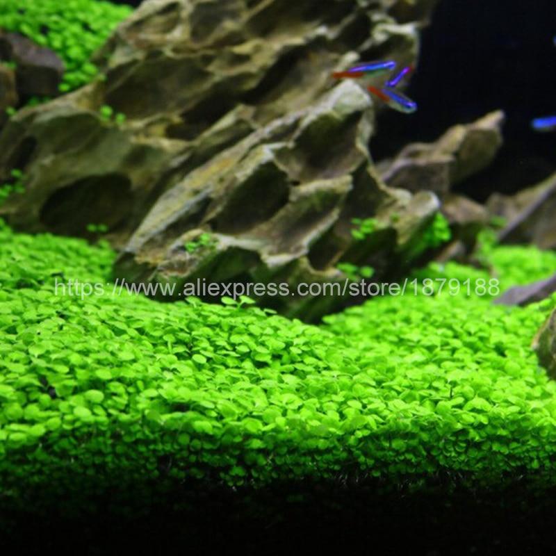Aquarium Landscape Ornament Aquatic Water Grass Mini Leaf Live Plant Fish  Tank Decoration Home Graden B888 In Decorations From Home U0026 Garden On ...