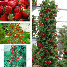 300pcs mountaineering strawberry bonsai plants home garden with NON-GMO tree big delicious fruit