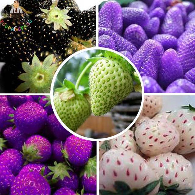 Rare Arcobaleno Fragola piante Organiche Colore Misto Delizioso piante di Fragola Cinese piante di Frutta 100 pz per Giardino di Casa