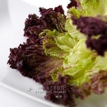 Marseed Space-saving 50 Purple Lettuce Vegetable Seeds Interesting Semi-Urban Garden
