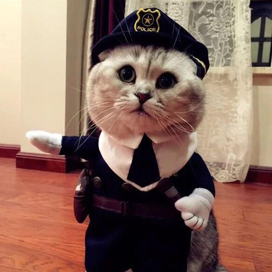 Прикольные картинки с котами в одежде