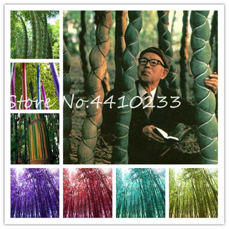 30 pz Colorato Bonsai di Bambù Moso Gaint Albero di Bambù Piante da Giardino Per La Casa Decorazione del Giardino Pianta In Vaso All'ingrosso Della Fabbrica