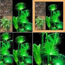 100 Pcs Rare Emerald Fluorescent Flower Seeds