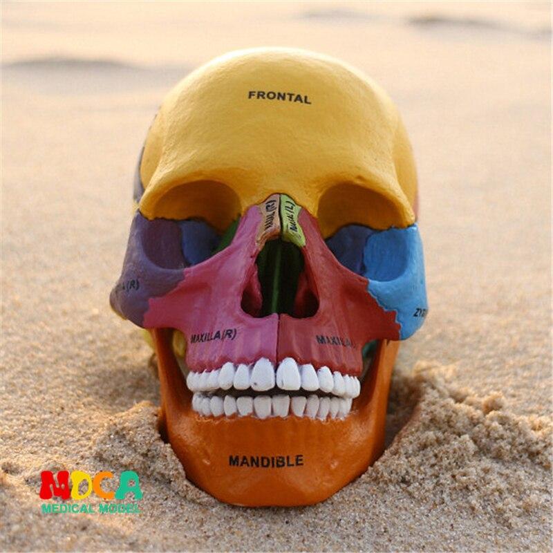Цвет кости 4d мастер головоломки сборки игрушки человеческого тела орган анатомическая модель для медиков обучающая модель