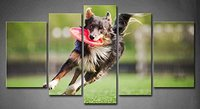BANMU No Frame 5 Panels Border Collie Dog Brings The Flying Disc Painting Picture Print On