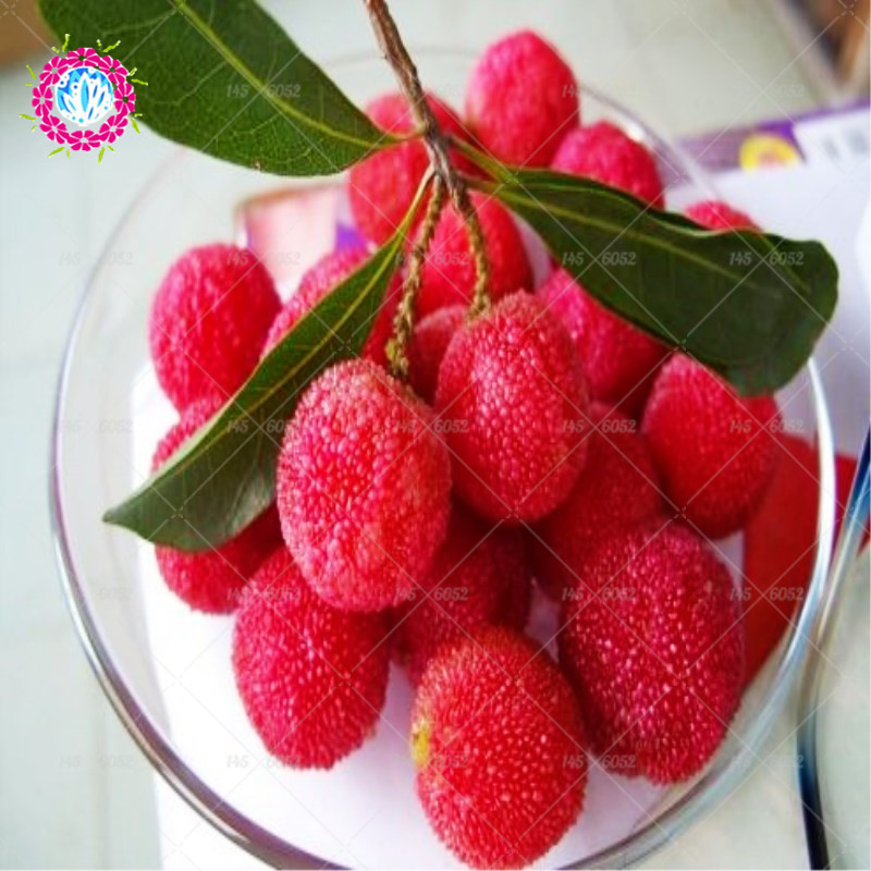 10pcs Bonsai Chinese Red Bay Delicious Fruit Tree Plants Myrica Rubra Perninial Fruit For Home Garden Pot Plants Planting