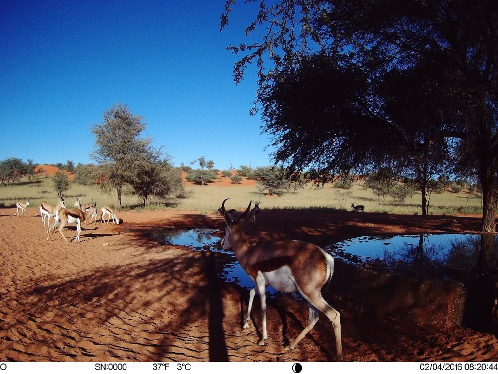 4G_GPS_hunting trail cameras (16)