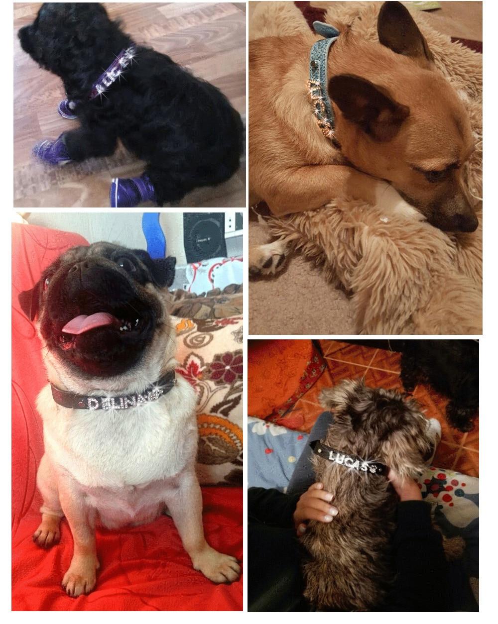 collier pour chien personnalise brillant
