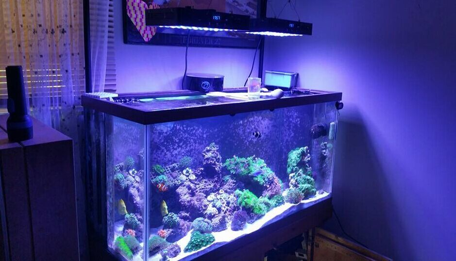 US $123 0 |Timer 16 inch 165w Reef Light Chinese Black Box Full Spectrum 3  Channels Remote Control Mounting Legs hanging Kit Included-in LED Grow