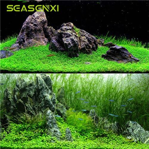 2pcs Aquarium Plant Seeds Aquatic Water Grass Decor Seeds Easy Planting Ornamental Fish Tank Landscape Plant