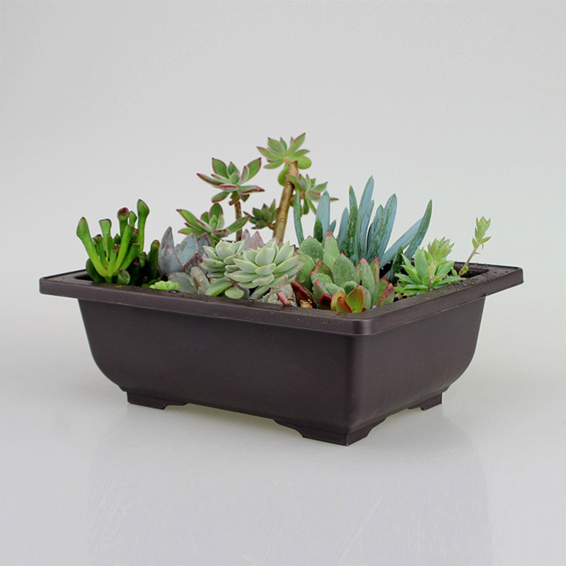 Planter Pot With Tray Plastic Succulents Pot Small Size Flowerpot Balcony Decorations Bonsai Nursery Pots Garden Supplies 35