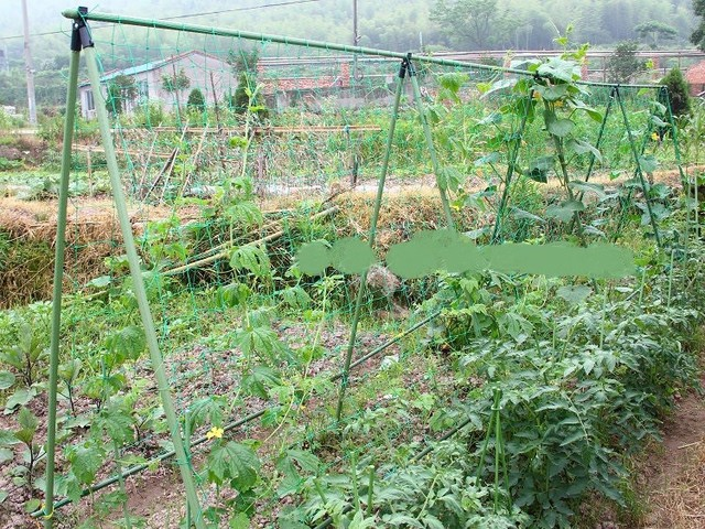 Free shipping 1 8X2 7 Garden Net Vine Plant Climbing Net Nylon Net for Home Garden.jpg 640x640 - 1.8X2.7 Garden Net Vine Plant Climbing Net Nylon Net - garden-supplies -