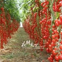 Hot Sale Time-limited Regular Novel Plant Pots Planters Plants New!!! 200 seeds/pack