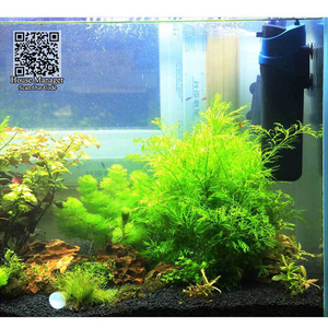 Image 5 - אקווריום UV מעקר, משאבת מסנן מים במחזור + אוויר להגדיל + UV לעקר מנורת + להסיר אצות + לרענן אוויר דגי טנק