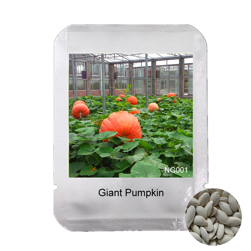 Professional Packaging 10 Pieces Extra-Big Organic Anti-cancer Giant Pumpkin Seed Super Pumpkins Seeds vegetables Garden, #NG001