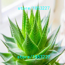 GGG 100pcs Vegetables and fruit seeds Aloe vera seeds edible beauty Edible cosmetic Bonsai plants Seeds for home & garden 49%