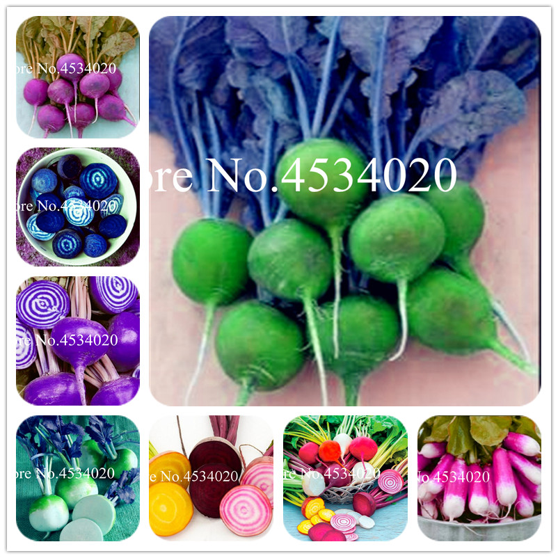 Bonsai Garden Bonsai Potted Plants Bonsai Semen 20pcs Blue Cherry Plants Organic Fruit And Rare Tree Plants High Germination For Home Garden Pots & Planters