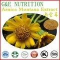 500g Natural de Arnica/Extrato de Arnica Montana com frete grátis