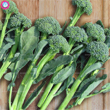 100pcs green broccoli seeds organic heirloom cauliflower vegetable seeds Edible planting for spring farm supplies easy to grow