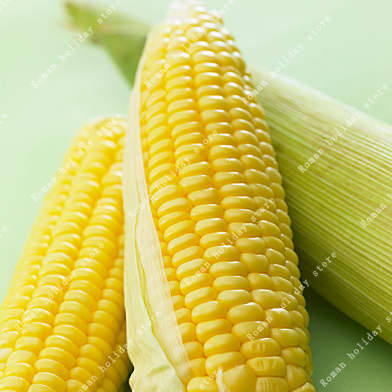 30 Pcs Yellow Sweet Corn Seeds Plants Vegetable Food Bonsai Maize Cereals