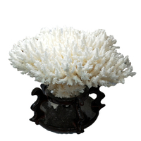Natural Crystal Stone Coral Sea White Coral Tree White Coral Aquarium Landscaping Home Furnishing Ornaments Home Decoration
