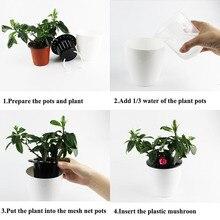 Self Watering Pot Planter