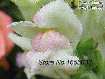Best Germinate Bonsai Seeds Chia Seeds Northern Lights Mix