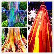 Buy  te beautiful Ornamental Tree,free shipping  online