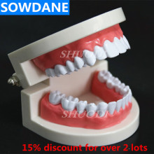 1:1 Dental Model Adult 28 tooth Resin  Plastic Oral Study Teaching Model Teeth Model dental soft gum practice teeth model for students with removable teeth deasin