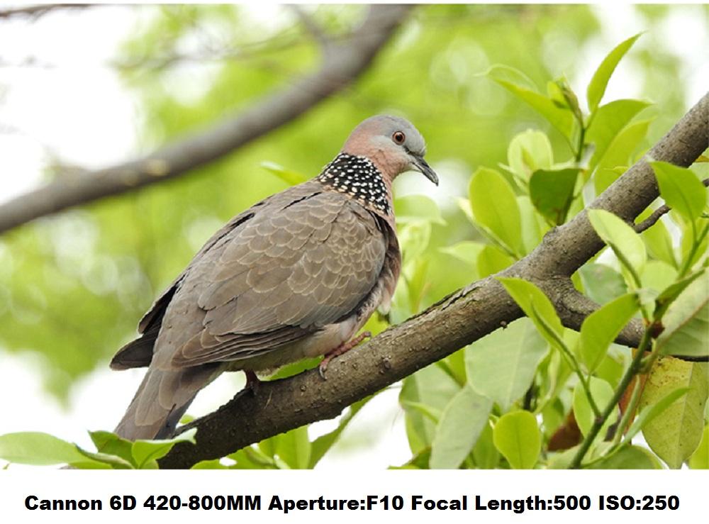 Lightdow 4-800mm F/8.3-16 Super Telephoto Lens Manual Zoom Lens for Canon Nikon Sony Pentax DSLR Camera 19