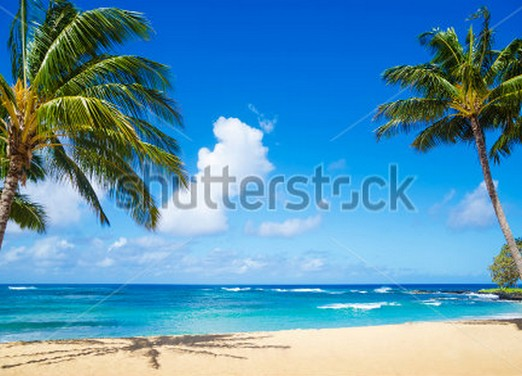 coconut palm tree on sandy beach Backgrounds for sale Vinyl cloth Computer printed hawaii backdrop  сайдинг vinyl on 3660х230 мм серо голубой