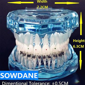 1 szt Przezroczysty Model zębów ortodontycznych z ceramicznymi i metalowymi uchwytami do komunikacji z pacjentem tanie i dobre opinie SOWDANE CN (pochodzenie)