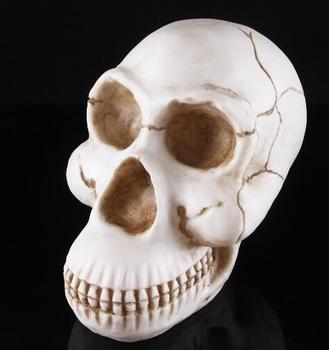 Gorilla skull animal skull model resin head props indoor office decoration furnishings