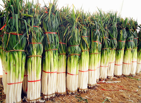 100Seed Giant Chinese Green Onion Vegetables Bonsai Plant Tree House Herb Garden