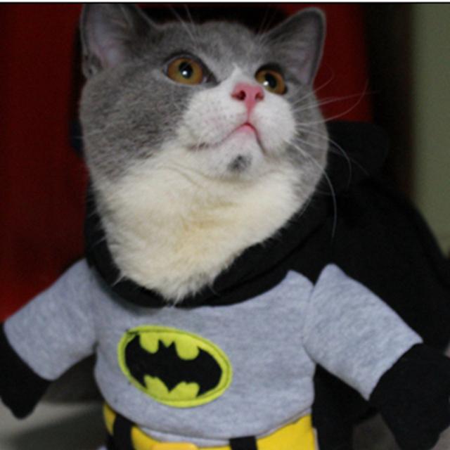 [10 Years] Cat Costume, Funny Batman Costume, Pet Clothing