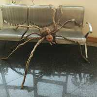 secret chamber Haunted bar decorate terror Giant Hairy Spider with LED Eyes for Halloween Decoration