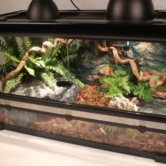 Reptile Tank Kit With Wire Mesh Lid Hide Away Cave Water Plate