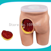 Buttocks Intramuscular Injection And Anatomic Structure Model Buttocks Anatomical Model