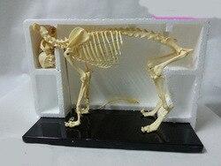 Бесплатная доставка модель скелета животных собака/кошка Скелет образовательная модель скелета модель