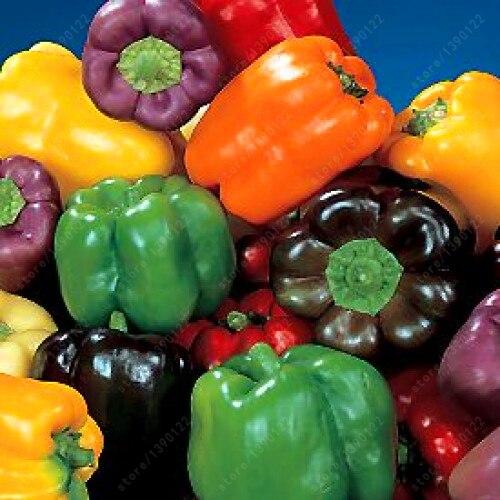How Long Do Pepper Plants Live  Homegrown