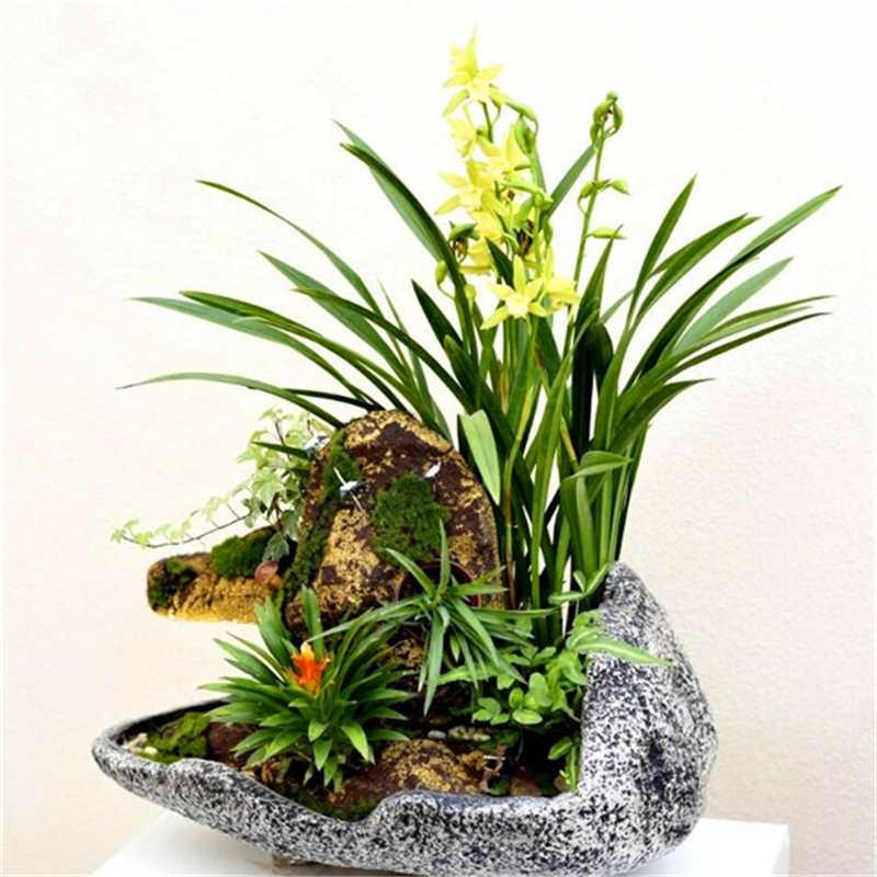 Grande Vendita! 100 pcs Rare Cymbidium Piante di orchidee Africano Cymbidiums Plantas, Phalaenopsis bonsai del fiore Piantina per la casa vaso da giardino