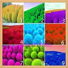 200 pcs/bag kochia,kochia scoparia,burning bush kochia scoparia,grass seeds,flower seeds,outdoor plant for home garden planting