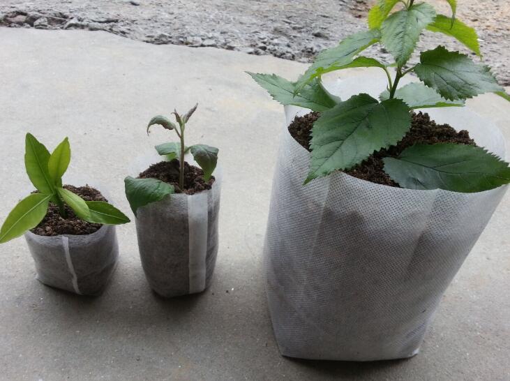 Verantwortlich 100 Pcs/lot Biologisch Abbaubar Samen Kindergarten Taschen Kindergarten Blumentöpfe Gemüse Transplantation Zucht Töpfe Garten Pflanzen Kindergarten Pflanzen