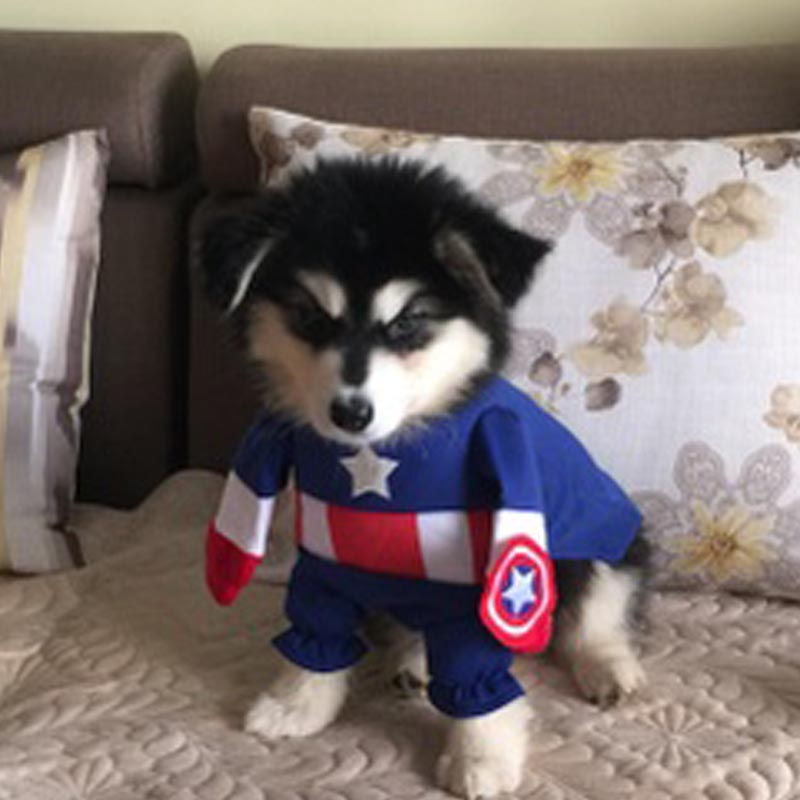 Funny Hallowee pet cat dog Captain America costume cosplay superhero Dog puppy coat jacket Clothes small dog Chihuahua clothes-in Dog Coats u0026 Jackets from ... & Funny Hallowee pet cat dog Captain America costume cosplay superhero ...