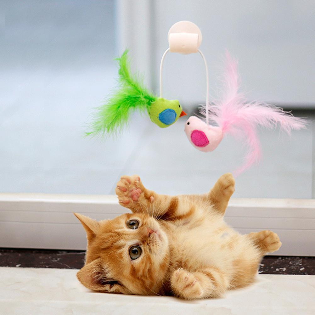 рассказывает коты с игрушками фото сохраняет введенное