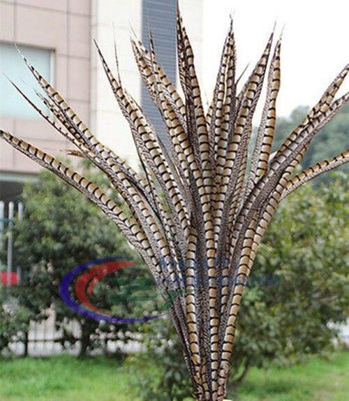 10 piezas de alta calidad natural señora Amherst faisán plumas 32 36 pulgadas/80 90 cm decorado faisán plumas de color natural-in Pluma from Hogar y Mascotas    1